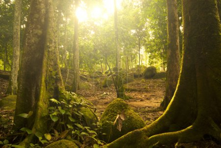Photo for Great green rain forest - Royalty Free Image