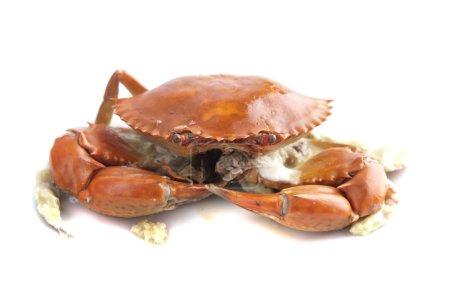 Photo pour Crabe cuit isolé en blanc - image libre de droit