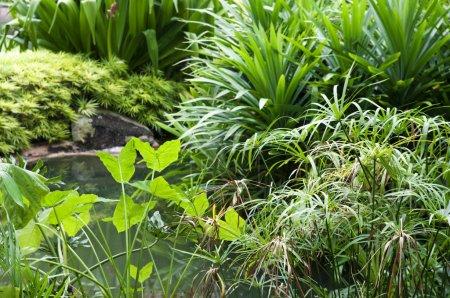 Foto de Plantas, estanque y jardín tropical. - Imagen libre de derechos