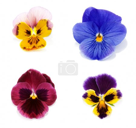 Four flower with petal