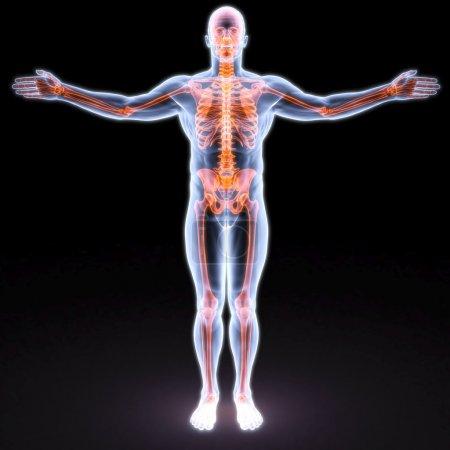Photo pour Le corps de l'homme sous rayons X. os sont surlignés en rouge . - image libre de droit