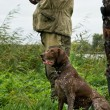 German pointer and closeup of two man at hunting...
