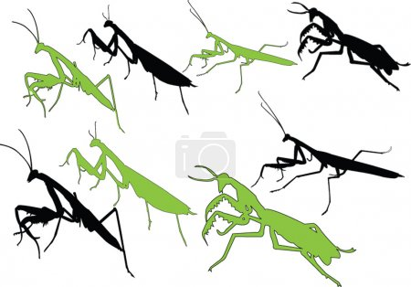 Devotee bug silhouette