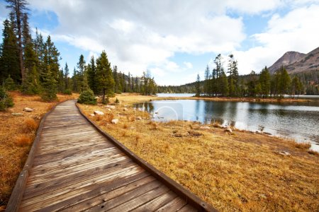 Photo for Boardwalk in forest - Royalty Free Image