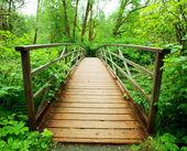 Boardwalk in green forest