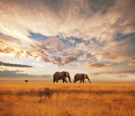 Elephants at dawn