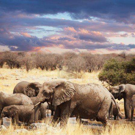 Elephants in bush