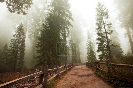 Photo pour Parc National de Sequoia aux Etats-Unis - image libre de droit