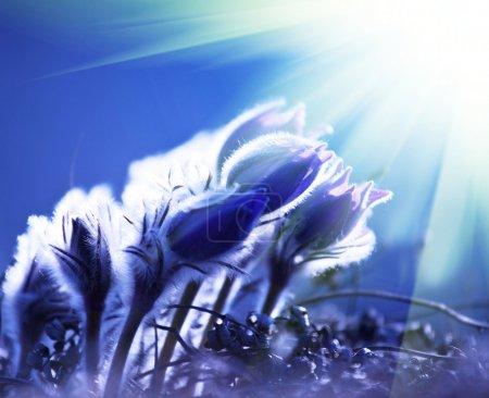 Flowers in light