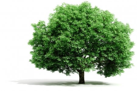 Photo for 3d tree render on white background - Royalty Free Image