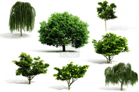 Photo for 3d tree pack - render on white background - Royalty Free Image