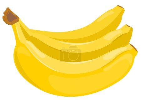 Illustration for Sheaf of bananas isolated on white. Vector illustration. - Royalty Free Image