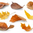 Collection of autumn leaves isolated on white...