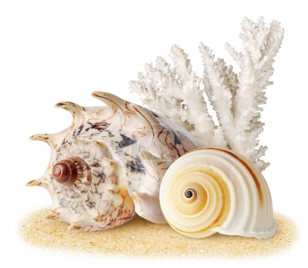 Photo for Sea shells and coral over sand - Royalty Free Image