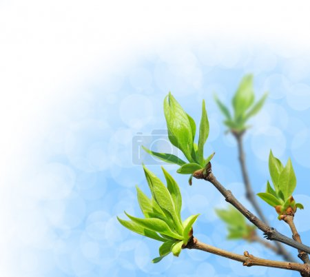 Photo pour Jeunes feuilles vertes sur un ciel bleu vif - image libre de droit