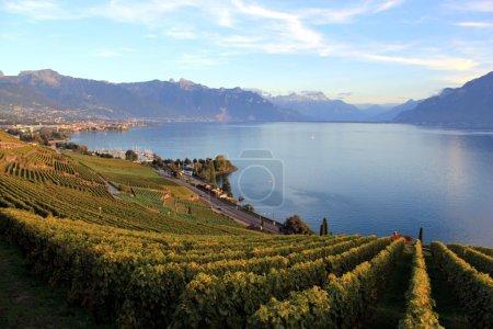 Photo pour Vignobles de lavaux célèbre et protégé près de montreux et les montagnes sur le lac Léman, Suisse, par le coucher du soleil - image libre de droit