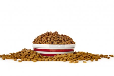 Cat Food in Bowl