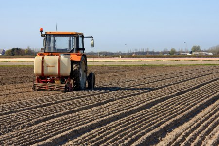 Photo pour Tracteur travaillant sur le champ de bulbes de fleurs néerlandais - image libre de droit