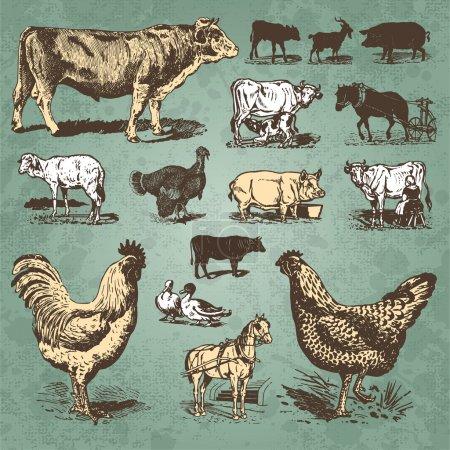 Farm animals vintage set (vector)