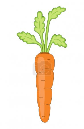Isolated vector carrot