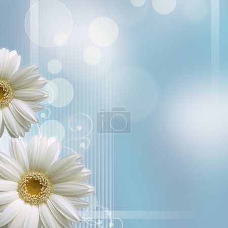 Camomile flower on blue background