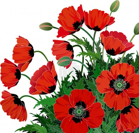 Illustration for Vector illustration of red poppies - Royalty Free Image