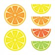 Halves and segments of vector citrus fruits on white background.