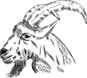 Vector - hand draw portrait goat isolated on background