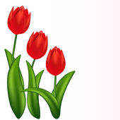 Vector illustration of red tulips Gradient meshes