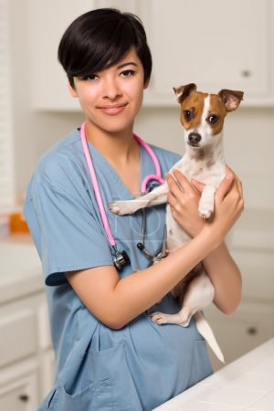 Smiling Attractive Mixed Race Veterinarian Doctor or Nurse with