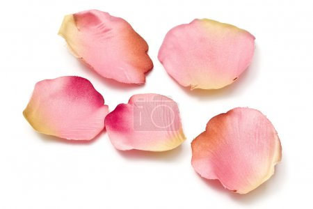 Foto de Pétalos de flores dispersas aisladas sobre fondo blanco - Imagen libre de derechos