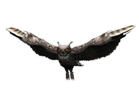 Photo pour Un grand-duc vol isolé sur blanc. - image libre de droit