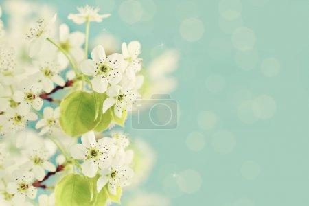 Photo pour Fleurs d'arbres sur un fond bleu. - image libre de droit