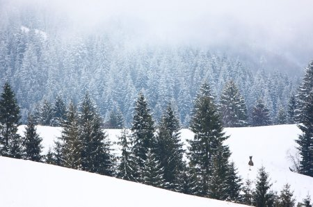 Fog in winter forest in mountain