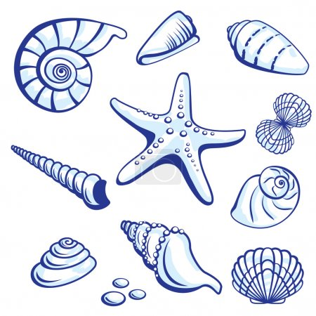 Illustration for Sea Set From Starfishes and Cockleshells. Vector illustration on white background. - Royalty Free Image