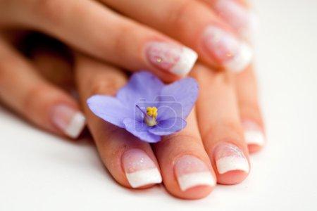 Photo pour Français manucure et fleur (macro, mise au point sélective) - image libre de droit