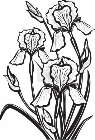 Illustration for Sketch of iris flowers - Royalty Free Image