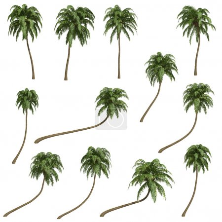 Photo for Coconut palms isolated on white - Royalty Free Image
