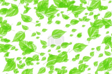 Photo for Numerous green leaves on white background - Royalty Free Image