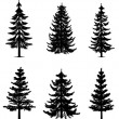 Collection of 6 pine trees on isolated white backg...