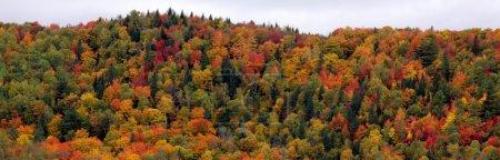 Photo pour Les belles couleurs sur le flanc d'une montagne d'automne. - image libre de droit