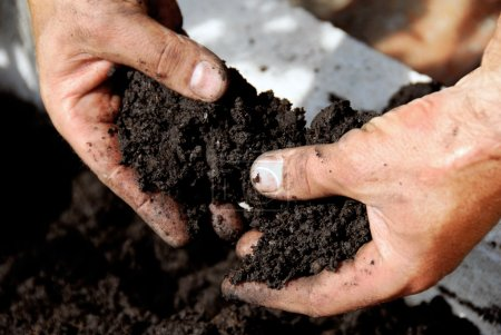 Photo for Black soil in man hand closeup outdoor - Royalty Free Image