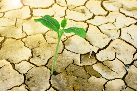 Photo for New growth through dry cracked ground - Royalty Free Image