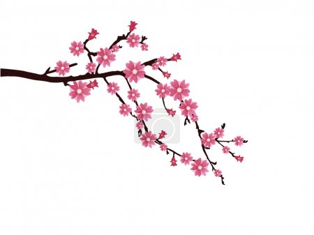 Illustration for Vector illustration of a branch with cherry blossom - Royalty Free Image
