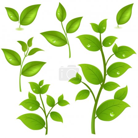 Illustration for Collection Of Green Branches, Isolated On White Background, Vector Illustration - Royalty Free Image