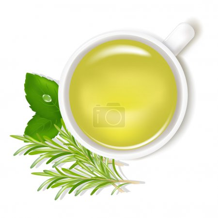 Illustration for Herbal Tea With Mint And Rosemary, Isolated On White Background, Vector Illustration - Royalty Free Image