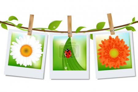 Ilustración de 3 fotos con la imagen de mariquita, hierba y manzanilla, fondo antiguo, vector illustration - Imagen libre de derechos