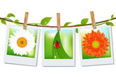 3 Photos With Image of Ladybird Grass And Camomile On Ancient Background Vector Illustration