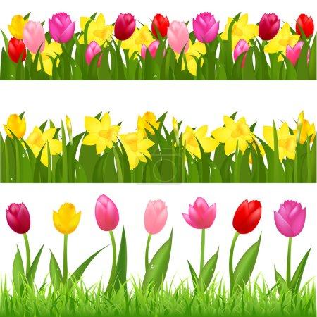 Illustration pour 3 plates-bandes de tulipes et de narcisses, isolés sur fond blanc, vector illustration - image libre de droit