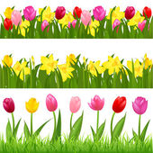 3 Flower Borders From Tulips And Narcissuses Isolated On White Background Vector Illustration